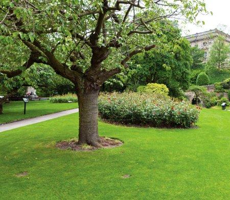 Photo pour Arbre dans le parc - image libre de droit