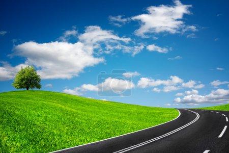 Camino entre campos