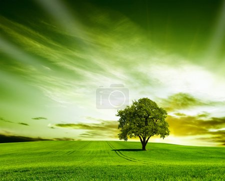 Photo for Spring meadow with big tree with fresh green leaves - Royalty Free Image
