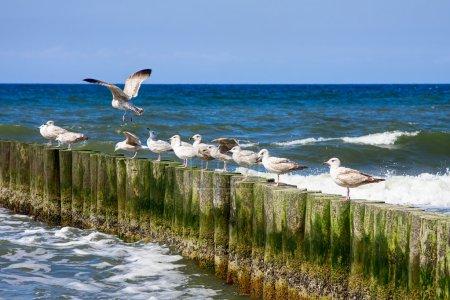 Seagulls and blue sea