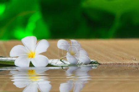 Photo pour Vue rapprochée de la fleur frangipani sur la couleur arrière - image libre de droit