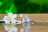 naturel, nature, propre, clair, harmonie, idyllique, aromathérapie, bonheur, calme, traitement, bien-être, calme, feuille, fleur, parfum, odeur, calme, flore, frais, vert, santé, santé, médecine, naturelle