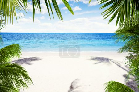 Photo for View of nice tropical beach with some palms around - Royalty Free Image