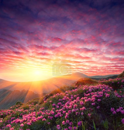 Photo for Spring landscape in mountains with Flower of a rhododendron and the sky with cloud - Royalty Free Image