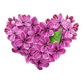 Heart from flowers of a lilac