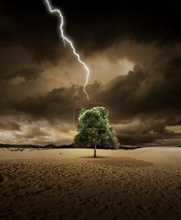 Foto de Iluminación está a punto de golpear un árbol del desierto - Imagen libre de derechos