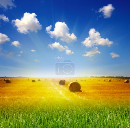 Photo for Haystack on the meadow in summer - Royalty Free Image
