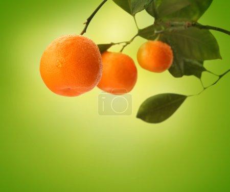 Orange branch on green