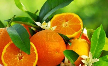 Photo pour Fruits et fleurs orange - image libre de droit