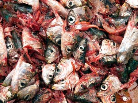 Photo pour Beaucoup de têtes de sardines sur un pieu comme une scène fréquente dans les poissonneries. - image libre de droit