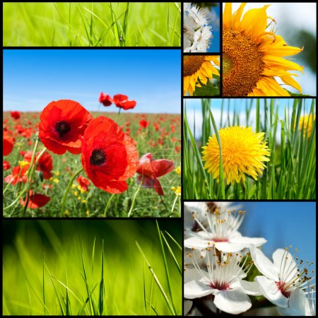 Photo for Beautiful spring flowers collection. - Royalty Free Image