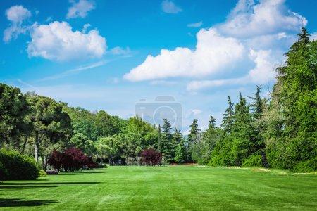 Photo pour Paysage photo d'un Goldfield avec des arbres et un champ rugueux - image libre de droit