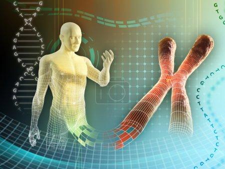 Photo pour Figure masculine créée par quelque chromosome humain. illustration numérique - image libre de droit