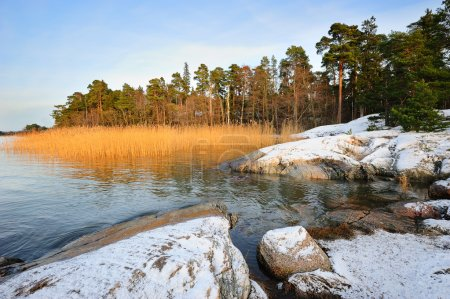 Photo for Winter scenery with reeds and rocks - Royalty Free Image
