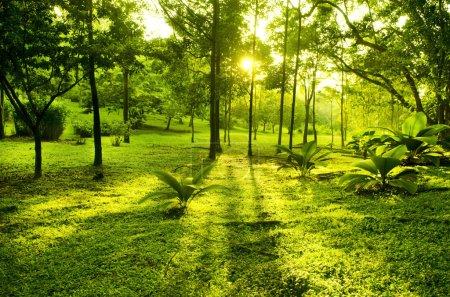 Photo pour Arbres verts dans le parc, une vue de matin avec rétro-éclairage - image libre de droit