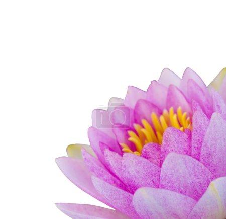 Photo pour Lotus rose - image libre de droit