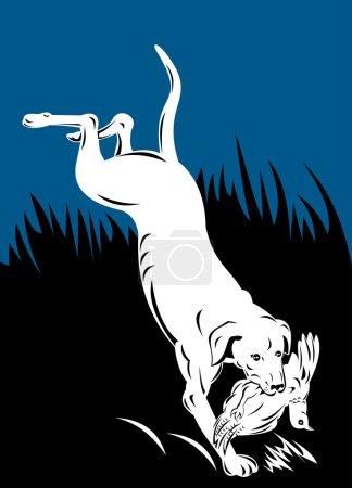 Golden labrador retriever dog head