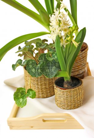 Group of houseplants on a white background