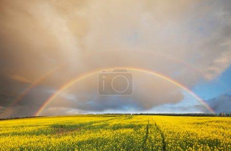 Photo for Rainbow on Hawaii - Royalty Free Image