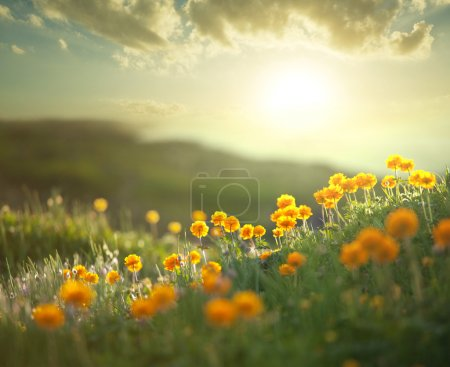 Photo for Meadow at morning - Royalty Free Image