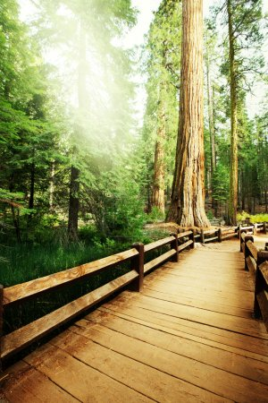 Photo for Sequoia National Park in USA - Royalty Free Image