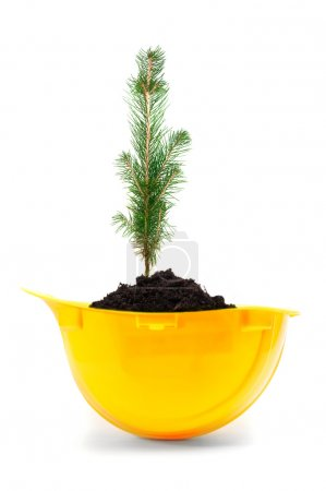 Small tree in yellow hard hat