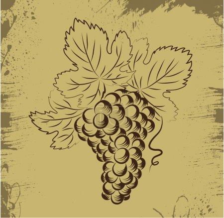 Illustration pour Des raisins. Élément pour illustration vectorielle de conception . - image libre de droit