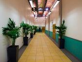 Corporate White and Yellow Hallway