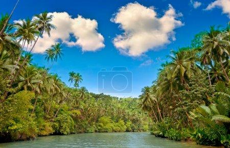 Photo pour Rivière tropicale avec palmiers sur les deux rives - image libre de droit