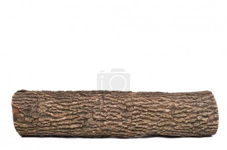 Isolated stub log with wooden texture