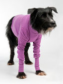Funny dog wearing sweater
