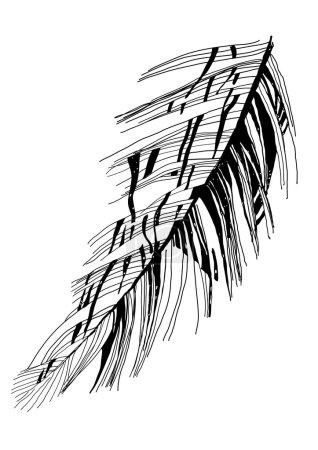 Illustration pour Dessin plume d'oiseau croquis vectoriel graphique - image libre de droit