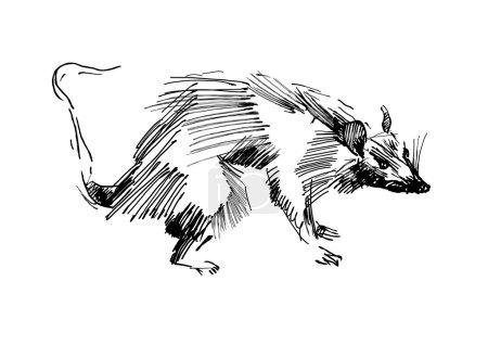 Rat hand drawing