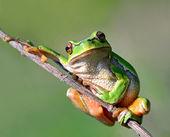 """Постер, картина, фотообои """"Лягушка находится в естественной среде обитания"""""""