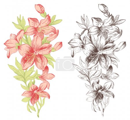 Illustration for Floral ornament in baroque style. Hand drawn roses. - Royalty Free Image