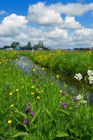 Photo pour Prairies et fossé dans un paysage typiquement hollandais - image libre de droit