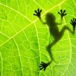 Tree frog on the leaf...