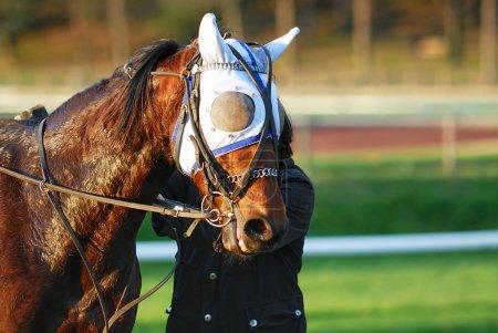 Photo pour Cheval de course après la course, les sports équestres - image libre de droit
