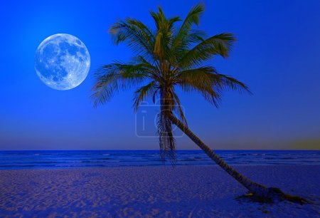 Tropical beach at midnight with a bright full moon