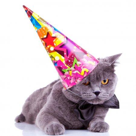 Photo pour Grand chat de fête anglais portant un chapeau de fête et noeud papillon sur fond blanc - image libre de droit