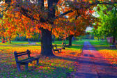 Krajinomalby ukazuje krásný slunečný podzimní den v parku