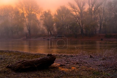 Spooky landscape showing forest trees beside the river on dark autumn morni