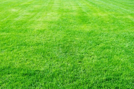 Photo for Clean empty football grass field - Royalty Free Image