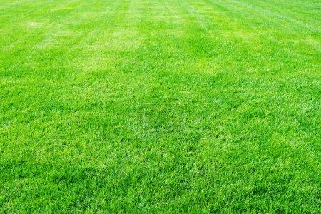 Photo pour Terrain avec gazon propre vide de football - image libre de droit