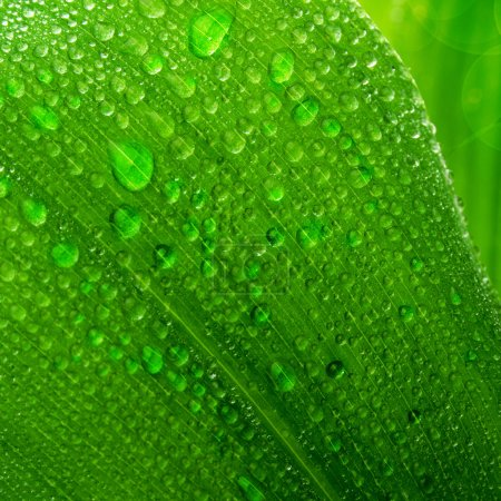 Photo for Beautiful green leaf with drops of water - Royalty Free Image