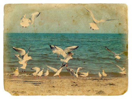 Photo pour Paysage marin avec mouettes. Vieille carte postale, design dans le style grunge et rétro - image libre de droit