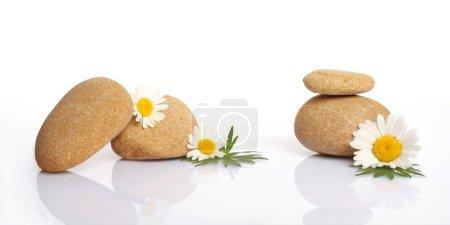 Photo pour Ensemble de fleurs sur pierre sur fond blanc - image libre de droit