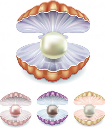 Photo pour La valeur des perles dans les coques de différentes couleurs - image libre de droit