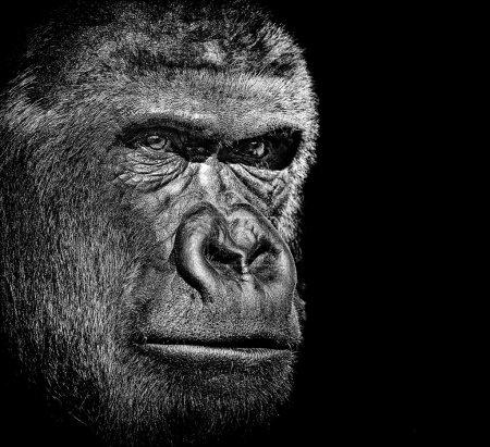 Photo pour Portrait de gorille - image libre de droit