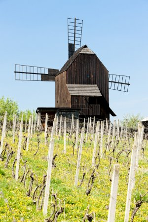 Wooden windmill with vineyard, Klobouky u Brna, Czech Republic